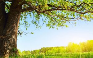 under_the_tree-Summer_Nature_HD_Wallpaper_medium
